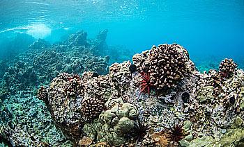 reef-6
