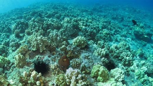 maui-reef-video
