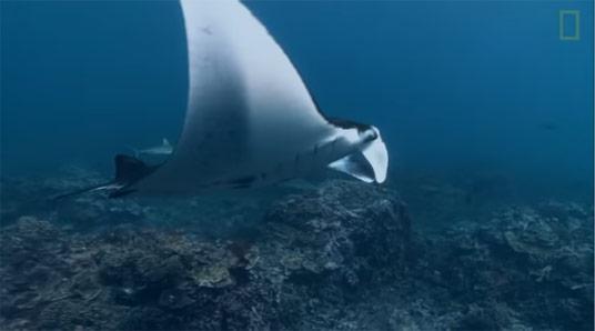 Pristine Seas Efforts Video