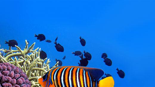 Reef Safe Puffer