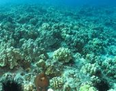 Hawaii Bills Relating To Preserving Coral Reefs - SB1150 & HB450