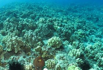 Hawaii Bills Relating To Preserving Coral Reefs – SB1150 & HB450